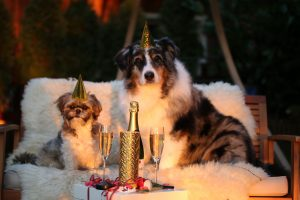 New Year's Resolutions from Your Dog