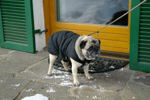 Avoid These Holiday Hazards for Pups