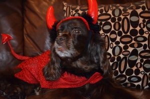 Tricks that Help Keep Dogs Safe at Halloween