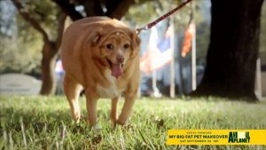 My Big Fat Pet Makeover is here to help pudgy pets