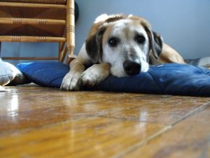 Alert about Bone Treats for Dogs that May Cause Illness and Worse